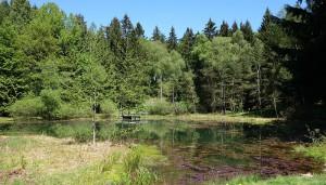 Steinbergweiher
