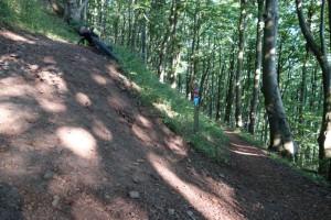 Die letzte Kurve unterhalb vom Gipfel des Dörnbergs