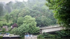 Regenwald ähnlich :)